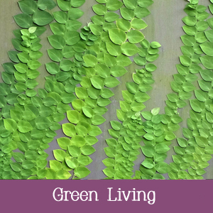 Energy efficiency and green living