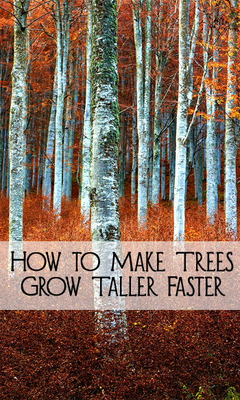 How to Make Trees Grow Taller Faster