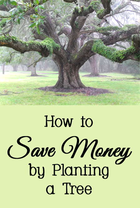Several Ways to Save Money By Planting a Tree